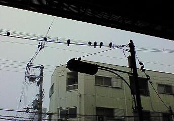 雨宿り鳩1.PNG